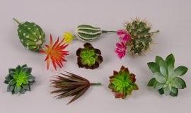 Искусственные кактусы и суккуленты