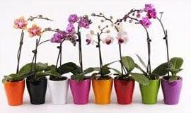 Горщики для орхідей
