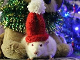 Готовимся к новогодним праздникам, украшаем дом