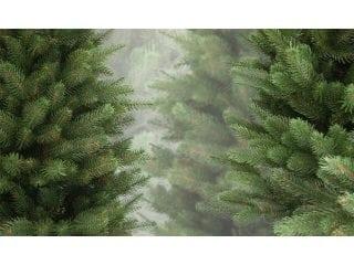 Новогодняя елка: какой она должна быть