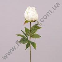Квітка Півонія біла 71249