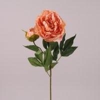 Квітка Півонія персикова 72113
