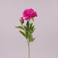 Цветок Пион темно-розовый 71977