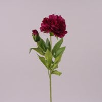 Цветок Пион марсаловый 71978