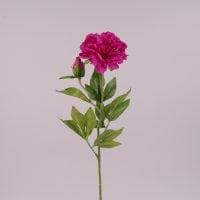 Цветок Пион фиолетовый 71979