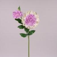 Квітка Жоржина кремово-фіолетова 71967