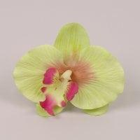 Головка Орхідеї Фаленопсис зелена 23844