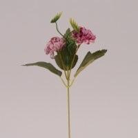 Цветок Бархотка темно-фиолетовый 72477